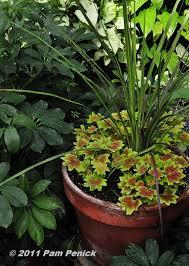 97 best garden container ideas images on pinterest garden