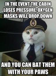 Funniest Cat Memes - funny cats airline pilot meme dump a day amuses me
