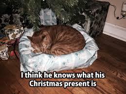 Christmas Cat Memes - christmas cat memes janet carr