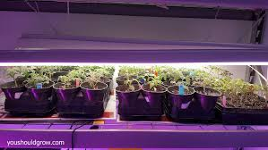 shop light for growing plants the complete guide to starting tomato seeds indoors you should grow
