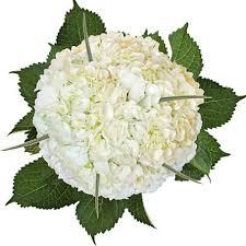 hydrangea bouquet hydrangea and grass bouquet white 8 bouquets sam s club