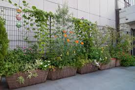 roof garden plants roof garden chipango