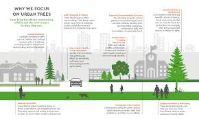 benefits of trees benefits of trees trees for cities
