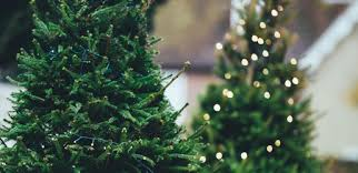 where to buy trees and decorations in jakarta steps