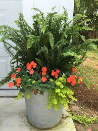 325 best container gardening images on pinterest plants flowers