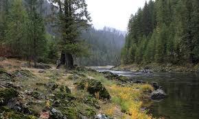 Montana forest images Bitterroot national forest montana alltrips jpg