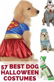Funny Animal Halloween Costumes Dog Halloween Costumes Small Large Dogs