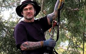 cool professional tree climber scientific american