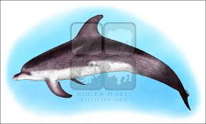 dolphins whales and porpoises full color u0026 line art