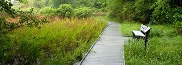 Ohio vegetaion images Cooperrider kent bog jpg
