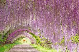 Flower Arch Stock Photo Picture And Royalty Free Image Image