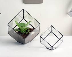 geometric terrarium a teardrop shaped glass terrarium use as a