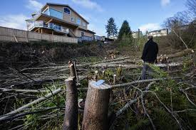 the guts of some acre of trees in west seattle cut