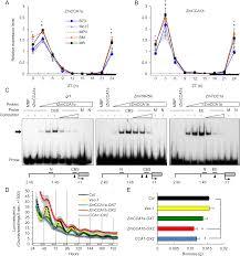 plos genetics temporal shift of circadian mediated gene