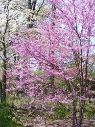 small garden trees australia cori u0026matt garden