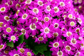 Image Of Spring Flowers by Early Spring Flowers 7030520