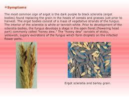 Common Plant Diseases - plant diseases