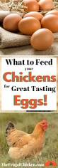 Best Backyard Chickens by 3364 Best Images About Chickens Everything You Need To Know