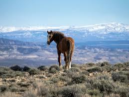 wild wild horses u2014 right in moffat county u0027s backyard