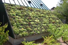 Roof Garden Plants Awesome Green Roof Design Plants Jpg Idolza