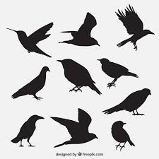 bird vectors photos psd files free download