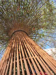 trellis tree thesis pinterest gardens