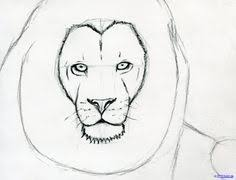 how to sketch a lion step 6 drawings pinterest how to sketch