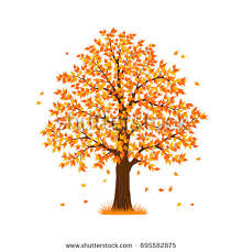 fall tree stock images royalty free images vectors