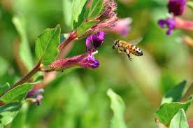 native plants michigan the environment report michigan radio