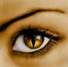 cat eye contact lenses eye contact cat eye