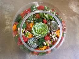 autumn succulent terrarium workshop u2014 paiko