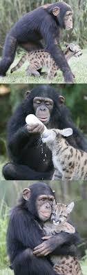 86 best cute animals images on pinterest veganism beautiful and download burger king resume haadyaooverbayresort com