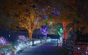 Toledo Zoo Christmas Lights by Christmas Zoo Lights Christmas Lights Decoration