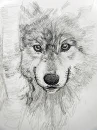 wolf sketch by miirkat on deviantart