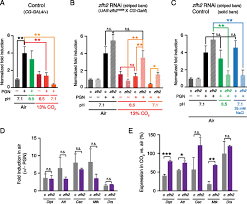 identification of drosophila zfh2 as a mediator of hypercapnic