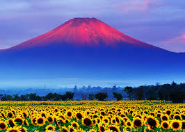 volcano flowers images mount fuji japan volcano nature mountains fields flowers