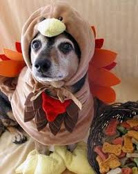 the only thanksgiving picture you need to see today