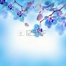 Blue Orchids Blue Orchid Flowers Images U0026 Stock Pictures Royalty Free Blue