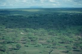 Tropical Savanna Dominant Plants - plants of the tropical savanna hunker