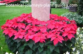 best artificial poinsettia christmas tree to purchase online