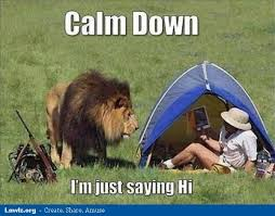 calm down i am just saying hi funny lion meme picture