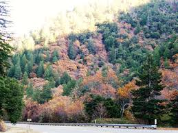 fall color tours rv