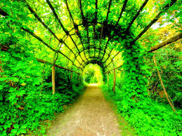other plants beautiful greenery garden nature green path