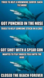 Shark Attack Meme - funny sharks telling a shark attack from the shark s pov point