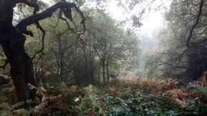 forest glade forest glade mystique 6