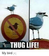 Thug Life Meme - thug life my bird life meme on sizzle