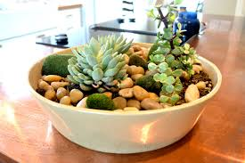 australian native indoor plants kangaroo paw bush diamond best australian native plants for pots