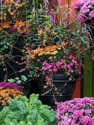 best 25 fall flower gardens ideas on pinterest bulb flowers