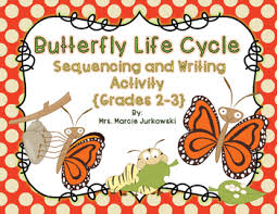 butterfly cycle sequencing and writing activity by marcie