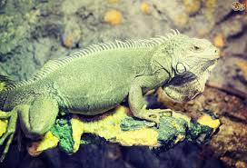 six essentials your reptile terrarium needs before you bring your
